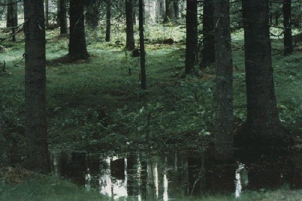 Svampskog