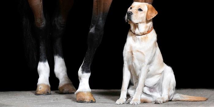 hest & Hund