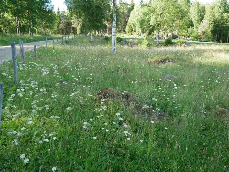Välhävdad, artrik slåtteräng i Ulricehamns kommun