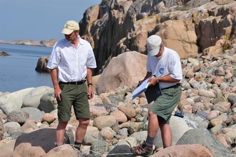 Olle Molander och Tore Mattsson inventerar ostronört. Foto Ingrid Mattsson