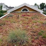 Grönt tak på carport