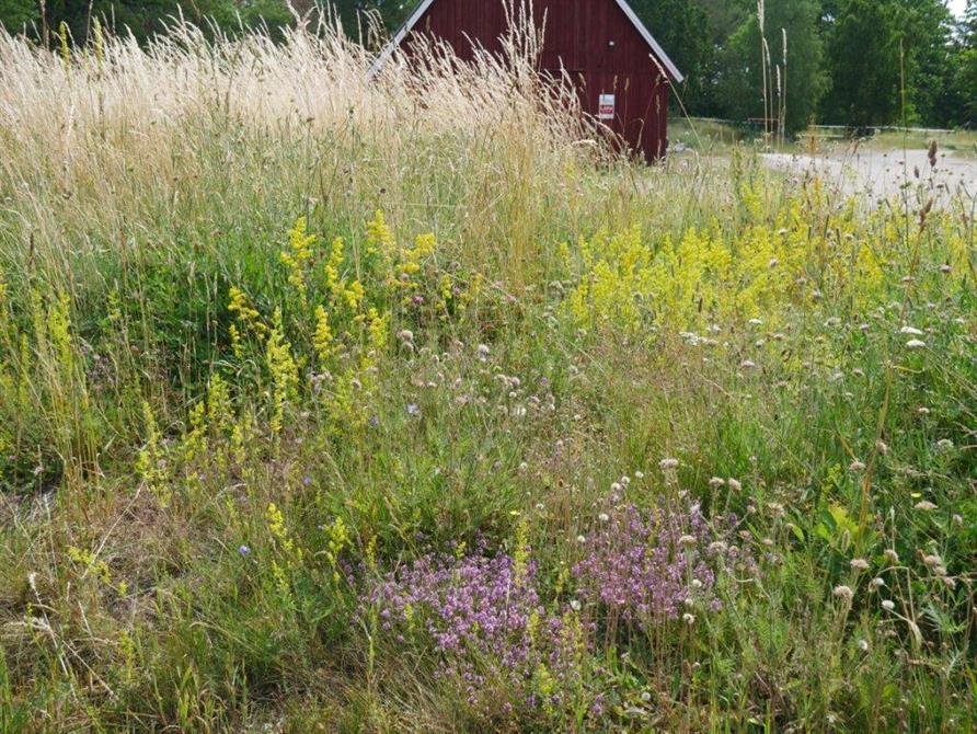 Här blommar det fint med backtimjan (NT) och annat nära E22 i Blekinge.