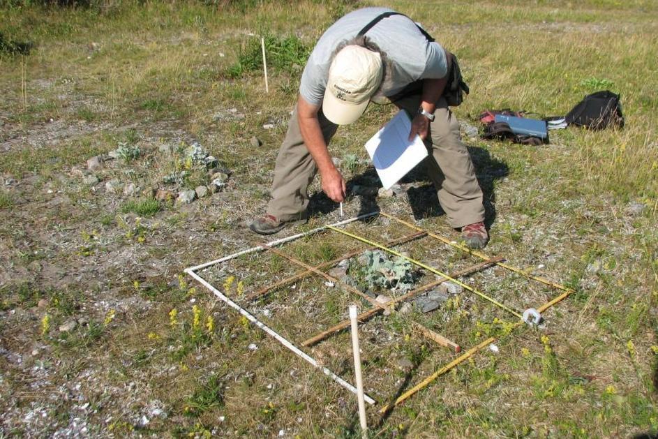 Tore Mattsson inventerar vegetation kring martornsplanta. Foto Olle Molander