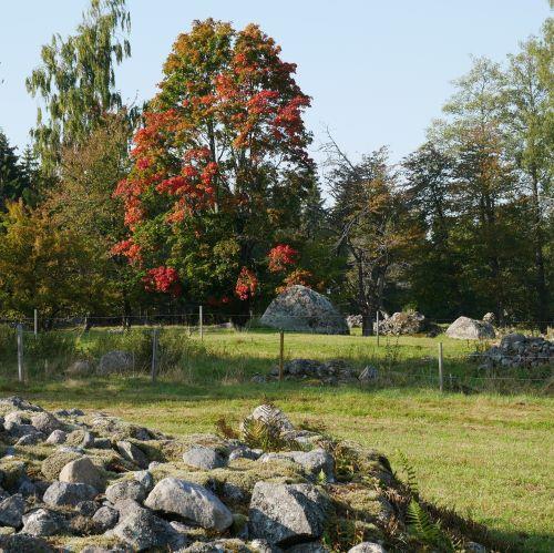 Fina höstfärger intill en slåtteräng i Tibro kommun.
