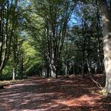 Underbara promenader bjuder Ekebyhof på, Ekerö, strax invid Drottningholm
