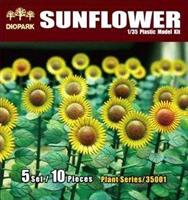 Sunflower Plant Series