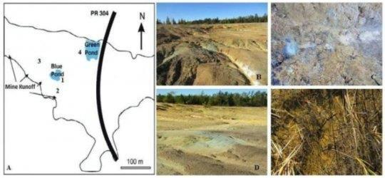 New metalloid oxide reducing bacteria found in Manitoba's Nopiming gold mine tailings
