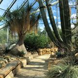Bergianska trädgården har flera växthus som flyttar dig direkt till andra delar av världen.
