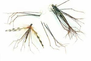 Dady Legs-natur-Veniard