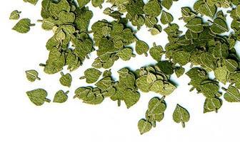 Grønne løvblader - Lind