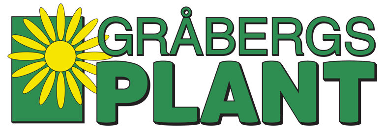 Gråbergsplant