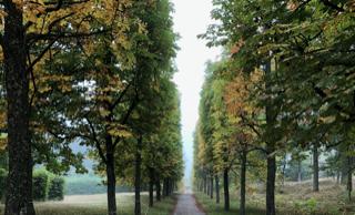 Träd: Foto Reine Lindholm