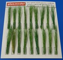 Tufts of reeds-green
