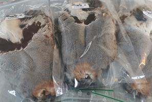 Partridge - Rapphöna helt skinn
