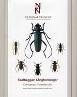Skalbaggar - Långhorningar
