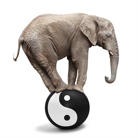 Elefant balans boll