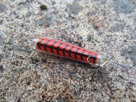 Tasmanian Devil Red Terror 13,5 gram