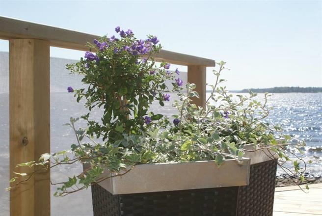 Havsfjärden - skir blomsterdekor i skyddat läge vid vindnät,.. vit 90%