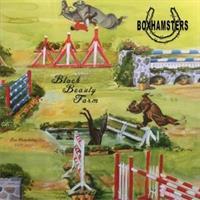 Boxhamsters-Black Beauty Farm