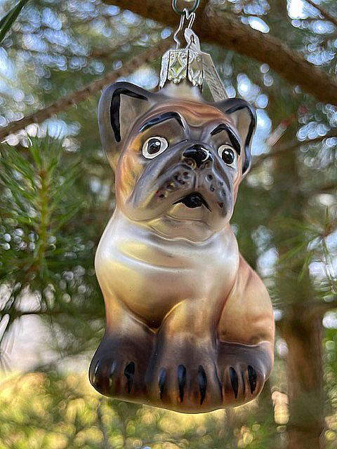 Baltus, fransk bulldog