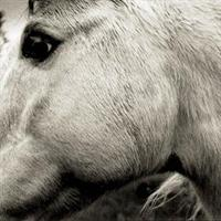 Bonny Light Horseman-Bonny Light Horseman(LTD)