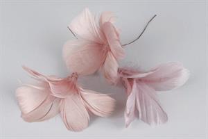 Fjäderblomma gammel rosa