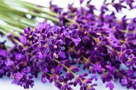 Lavendel refill 200ml
