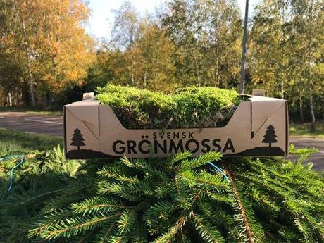 Svensk grönmossa