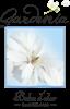 Gardenia roll-on 5ml tester