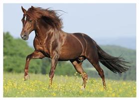 Puslespill Hest, 500 brikker