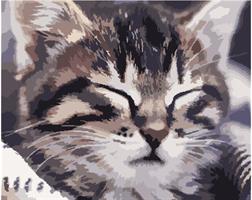 Mal eller nummer, Katteansikt 50*40cm