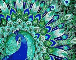 Mal eller nummer, Påfugl blå/grønn 50*40cm (YC2361)