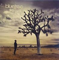 BLUETREE - GOD IN THIS CITY CD