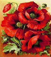Diamond Painting, Valmuer rød 40*50cm (3D002) GLITTER