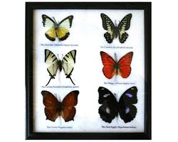 Fjärilar - 6st i ram (5 pack)