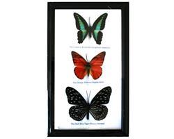 Fjärilar - 3st i ram (5 pack)