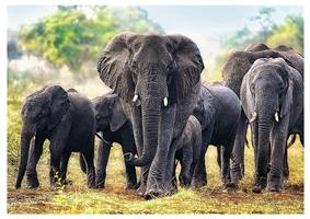 Puslespill Elefanter 1000 brikker