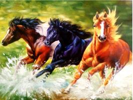 Diamond Painting, 3 Hester i galopp 50*40cm FPK