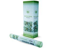 Green Tree - Hexa White Sage (6 pack)