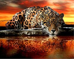 Diamond Painting, Leopard v/vann 50*40cm GLITTER