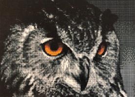 Diamond Painting, Ugle m/orange øyne 37,6*27,6cm FPR
