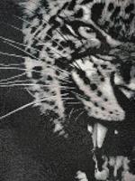 Diamond Painting, Tigeransikt 30*40cm FPR