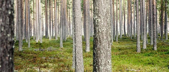 Skog i norr