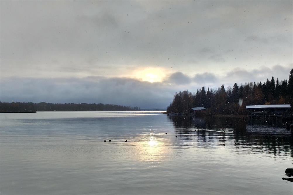 Snön faller inne i Svedjeviken.