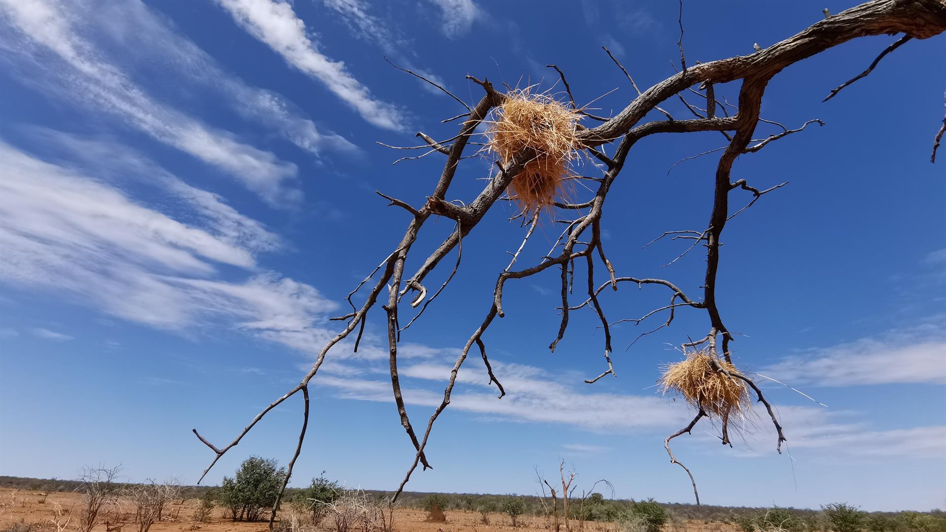 Namibian metsästysmatkat