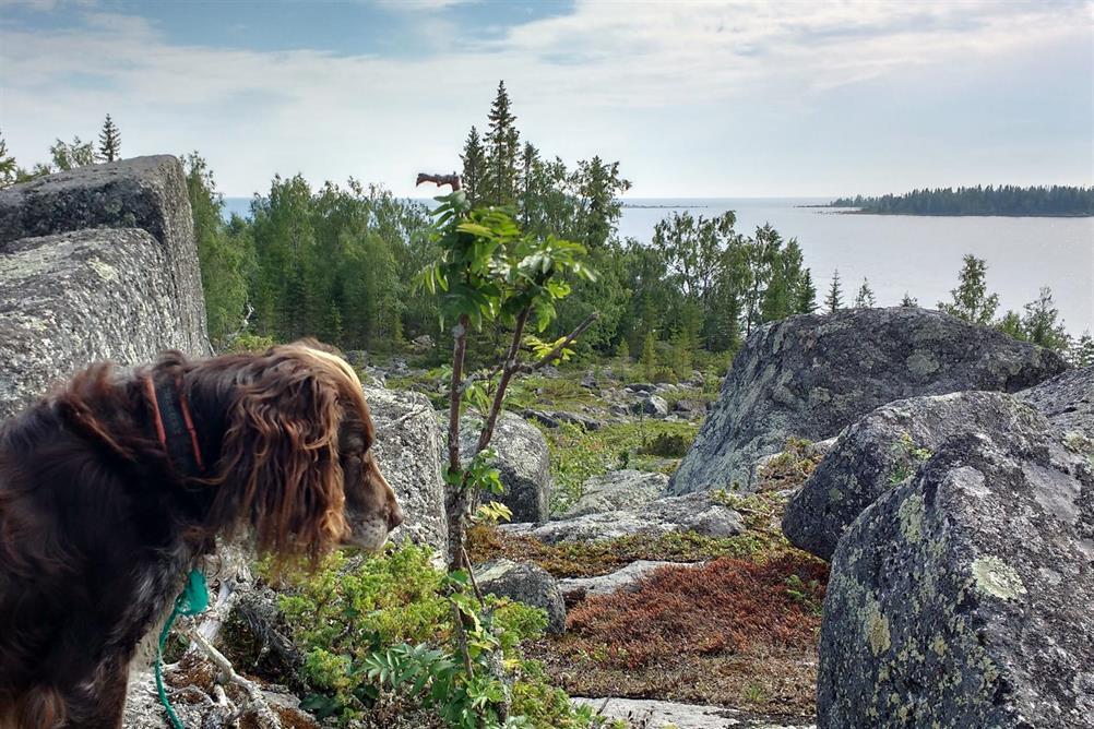 Vacker utsikt från Grisselklubben ut mot Renskär.