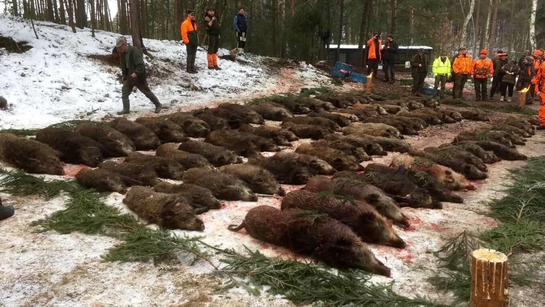Tsekin metsästysmatkat