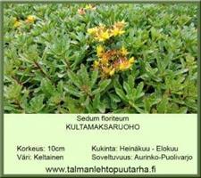 Kultamaksaruoho floriferum