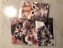Kortfodral Katter