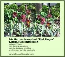 Tarhakurjenmiekka  'Red Zinger'